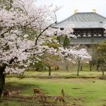 The spirit of sake is enshrined at Nara